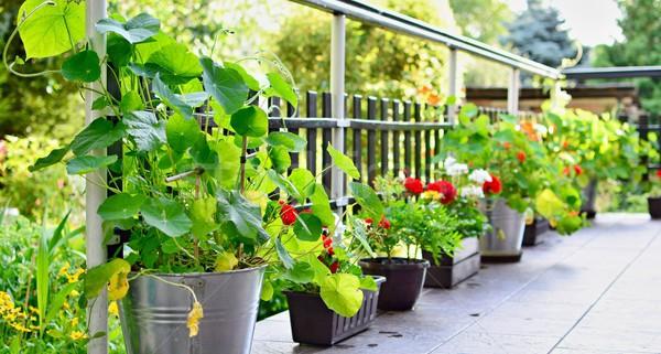 Taras kwiaty domu zielone roślin kwiat Zdjęcia stock © hamik