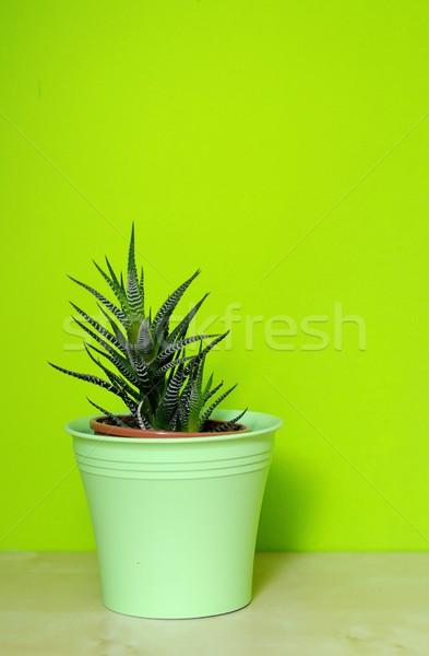 алоэ зеленый пластиковых цветочный горшок стены фон Сток-фото © hamik