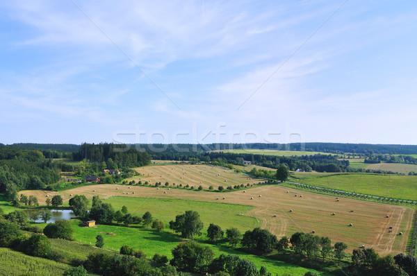Summer landscpae Stock photo © hamik