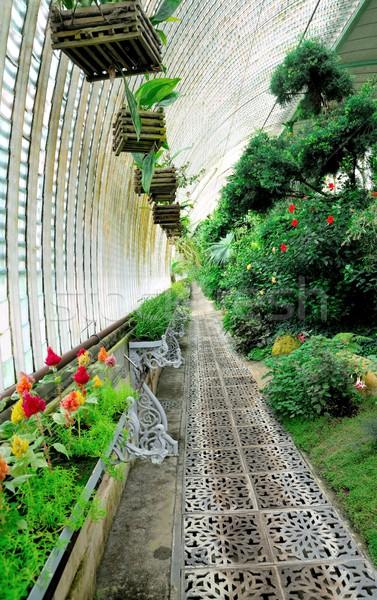 ビッグ 温室 ショット ヨーロッパの 花 ストックフォト © hamik