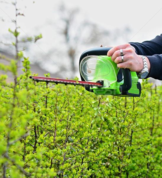 Trimming a Hedge Stock photo © hamik