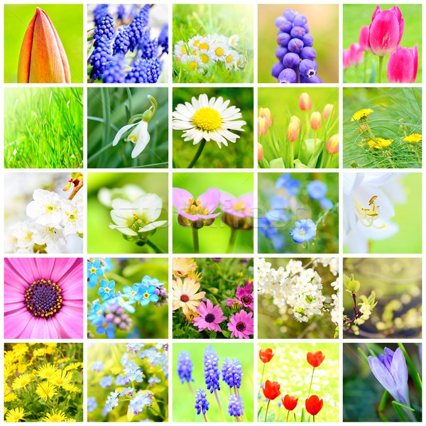 Spring flower collage Stock photo © hamik