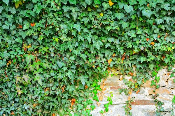 Stenen muur klimop buitenkant gedekt groene muur Stockfoto © hamik