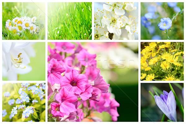 Zdjęcia stock: Wiosną · naturalnych · kolaż · streszczenie · roślin · kwiaty