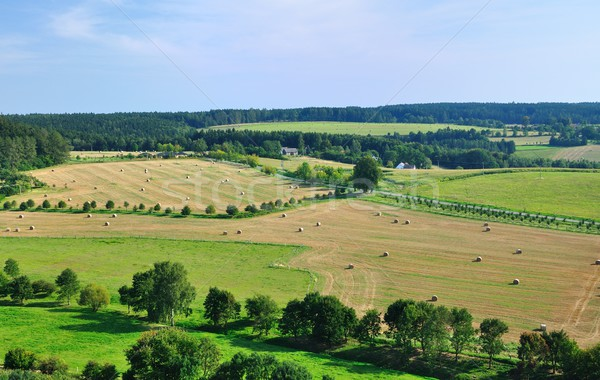 Summer landscape Stock photo © hamik