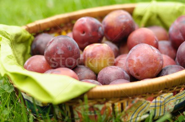 Szilva fű gyümölcs kert kék kosár Stock fotó © hamik