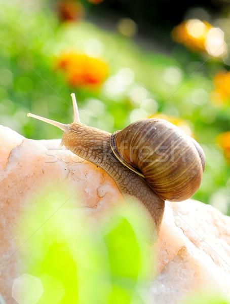 Caracol rocha backlight jardim verde pedra Foto stock © hamik