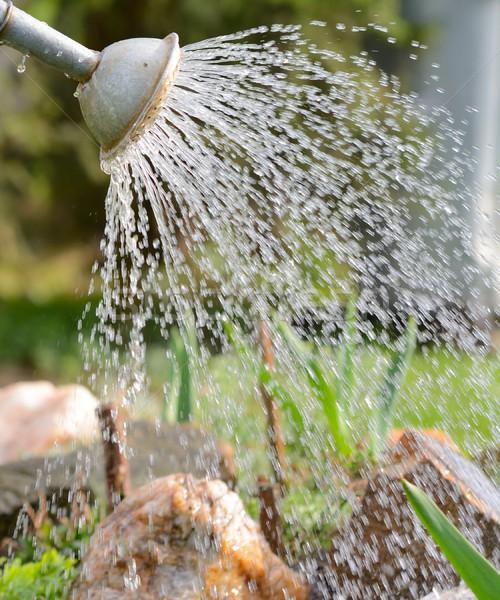 水まき 庭園 クローズアップ ショット 古い シート ストックフォト © hamik