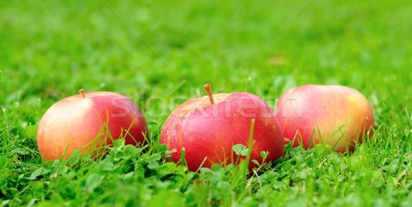 Vermelho maçãs para baixo comida jardim Foto stock © hamik