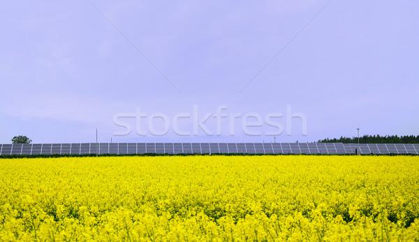黄色 フィールド 駅 花 ストックフォト © hamik