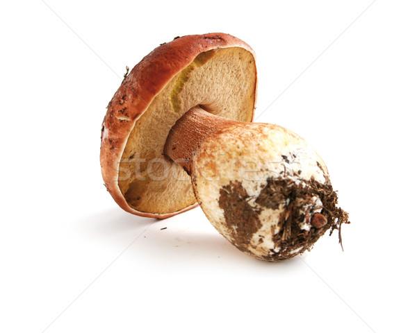 Borowik odizolowany biały żywności lata jesienią Zdjęcia stock © hansgeel