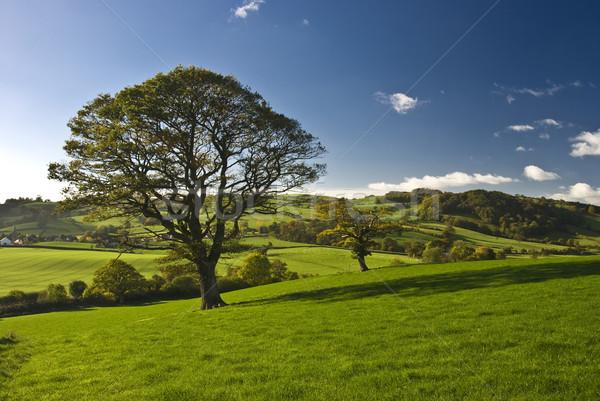 Photo stock: Anglais · arbre · stand · seuls · campagne · ciel