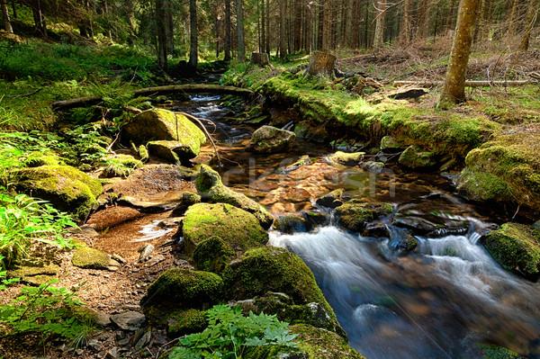 Erdő patak hdr föld tavasz fák Stock fotó © hanusst