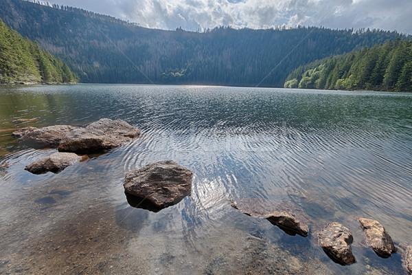 Negro lago forestales sur agua árbol Foto stock © hanusst