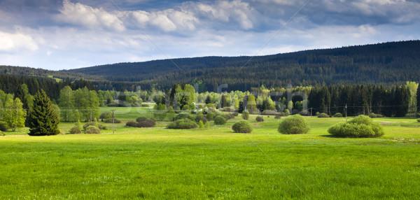 Majestueus zonsondergang bergen landschap zomer groen gras Stockfoto © hanusst