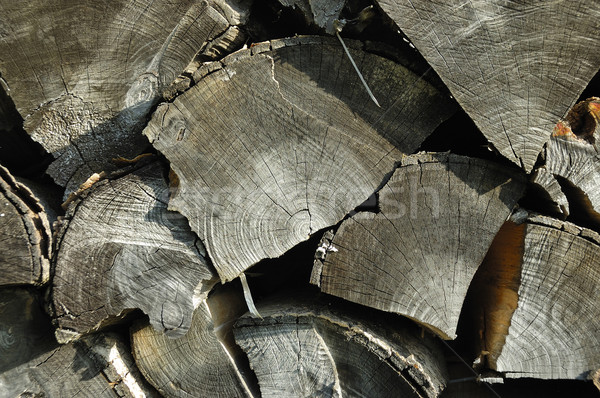 Fa textúra textúra öreg fa terv fák Stock fotó © hanusst