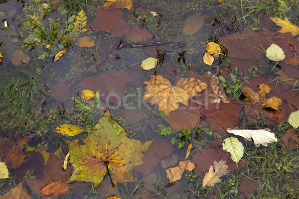 Abstract kleurrijk textuur boom natuur Stockfoto © hanusst
