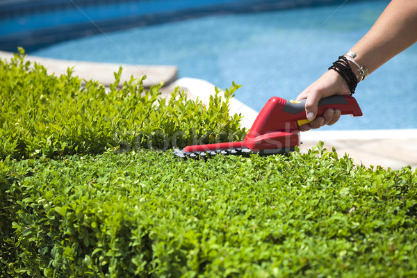 Hedge trimmer Stock photo © hanusst