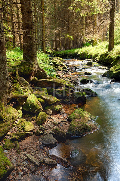лес ручей hdr землю весны лет Сток-фото © hanusst