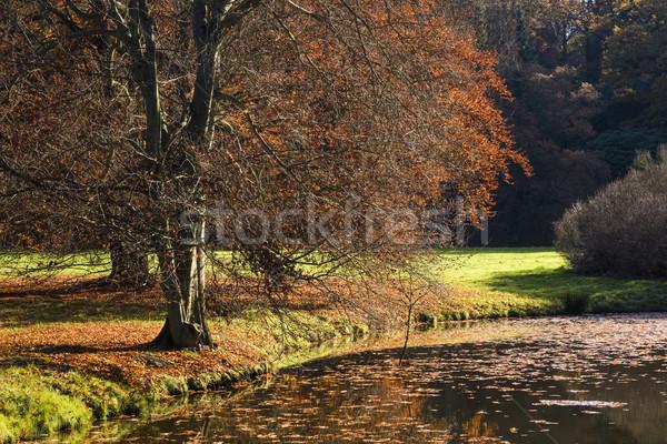 Photo stock: Arbre · matin · étang · soleil · eau · printemps