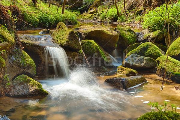 川 森林 hdr 水 ツリー 春 ストックフォト © hanusst