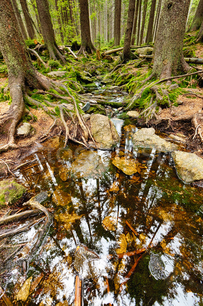 Erdő patak hdr föld természet fák Stock fotó © hanusst