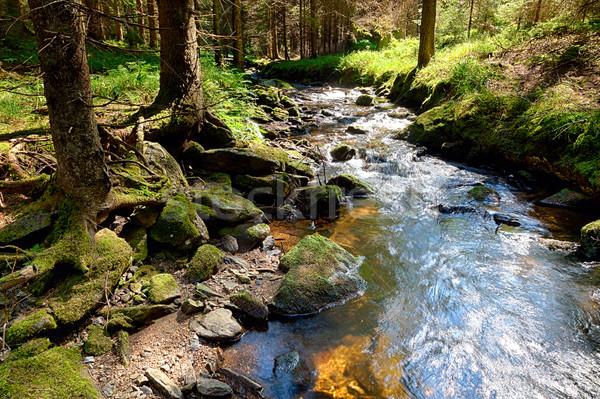 森林 小川 hdr 地上 自然 木 ストックフォト © hanusst