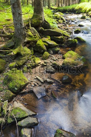 The primeval forest with the creek - HDR Stock photo © hanusst