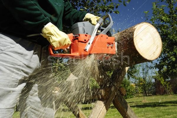 бензопила дерево древесины работник кожа Сток-фото © hanusst