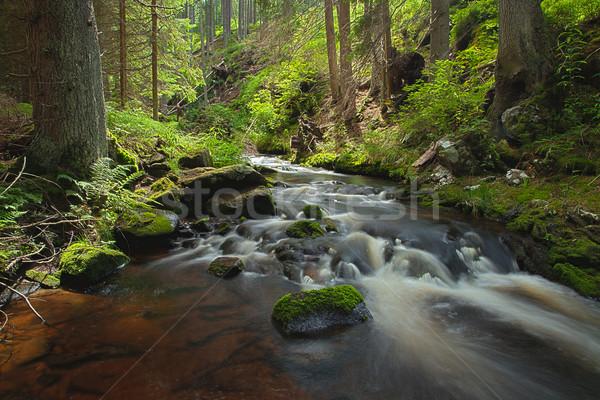 Rio floresta primavera sol luz folha Foto stock © hanusst