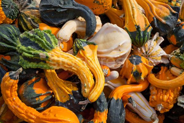 収穫 スカッシュ 自然 フルーツ 緑 ストックフォト © hanusst