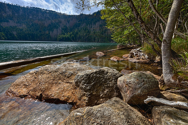 Glacial Black Lake surrounded by the forest Stock photo © hanusst