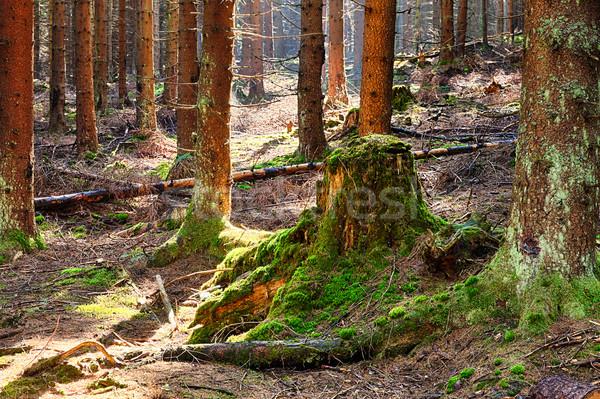 лес весны лет джунгли парка Европа Сток-фото © hanusst