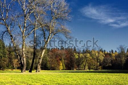 Photo stock: Forêt · arbre · herbe · nature · paysage · arbres