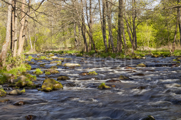 The river in the forest Stock photo © hanusst