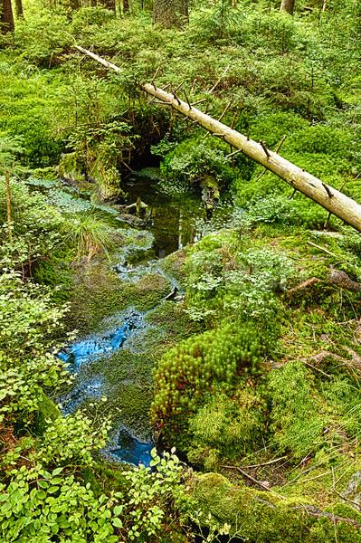 Foresta hdr terra natura alberi estate Foto d'archivio © hanusst