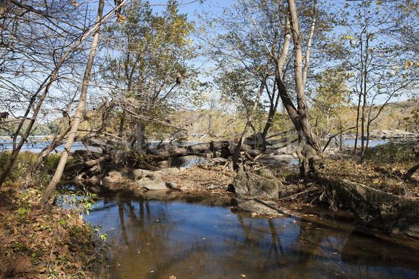 Rivier najaar Virginia USA boom achtergrond Stockfoto © hanusst