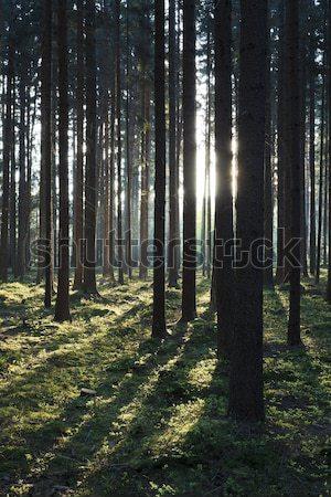 森林 ツリー 春 自然 木 工場 ストックフォト © hanusst