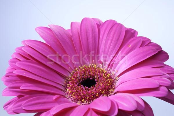 à l'intérieur macro détail printemps feuille jardin Photo stock © hanusst