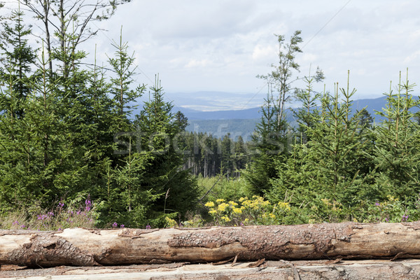 Bos wolken hout natuur Stockfoto © hanusst