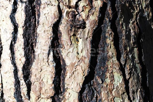 Régi fa ugatás textúra dekoltázs fa építkezés Stock fotó © hanusst