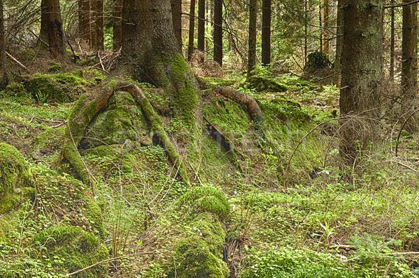 森林 木 夏 工場 ジャングル 公園 ストックフォト © hanusst