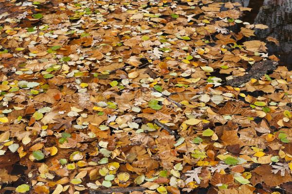 Soyut sonbahar yaprakları renkli doku ağaç doğa Stok fotoğraf © hanusst