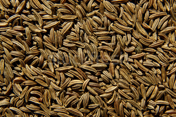 Cumin seeds Stock photo © hanusst