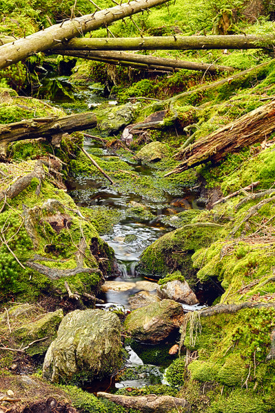 Foresta torrente hdr terra natura alberi Foto d'archivio © hanusst