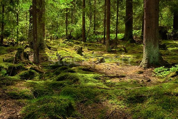 лес деревья лет завода джунгли парка Сток-фото © hanusst