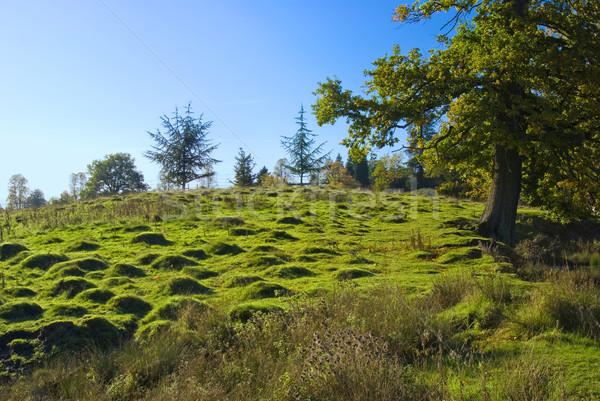 The English moorland Stock photo © hanusst