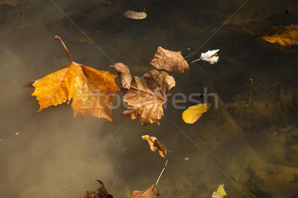 Abstract background of autumn leaves Stock photo © hanusst
