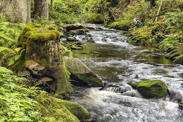 Bos kreek hdr grond natuur bomen Stockfoto © hanusst