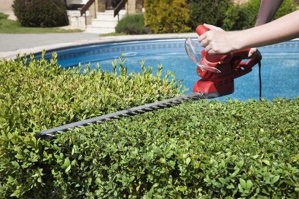 Hedge trimmer Stock photo © hanusst